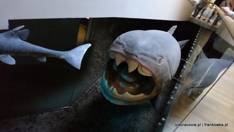 Prehistoryczna ryba pancerna
